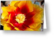 Cactus Flower V Greeting Card