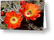 Cactus Flower Twins Greeting Card