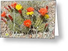 Cactus Flowers Greeting Card