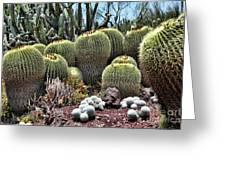Cactus Galore  Greeting Card