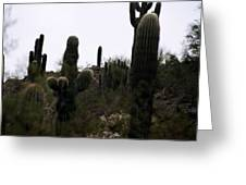 Cactus Gathering Greeting Card