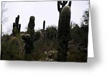 Cactus Gathering Greeting Card by Kevin Igo
