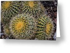 Cactus Hay Greeting Card