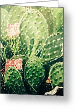Cactus In Blossom  Greeting Card