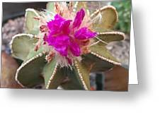 Cactus In Flower Greeting Card