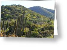 Cactus In The Desert  Greeting Card