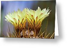 Cactus Life Greeting Card