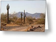 Cactus Line Dirt Road Greeting Card