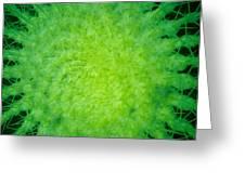 Cactus Nr4 Greeting Card
