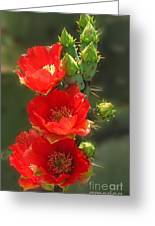 Cactus Red Beauty Greeting Card