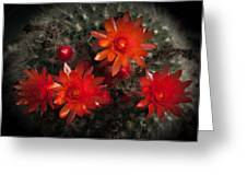 Cactus Red Flowers Greeting Card