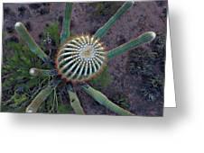 Cactus, Saguaro Long Armed Greeting Card