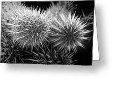 Cactus Spines Greeting Card
