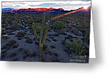 Cactus Sun Beam Greeting Card