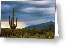 Cactus Sunset Saguaro National Park Arizona Greeting Card