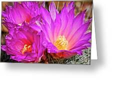 Cactus-thelocactus Macdowellii Greeting Card