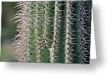 Cactus Thorns Greeting Card