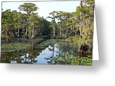 Caddo Lake Greeting Card