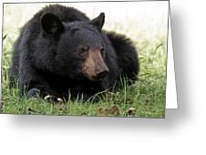 Cades Cove Bear II  Greeting Card