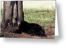 Cades Cove Bear Greeting Card