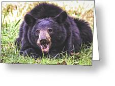 Cades Cove Black Bear Greeting Card