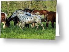 Cades Cove Horses Greeting Card