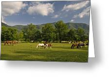 Cades Cove Horses In Smoky Mountains Tennessee Usa Greeting Card
