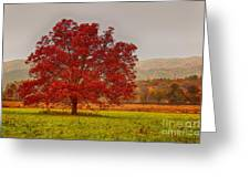 Cades Tree After The Rain Greeting Card