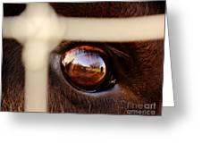 Caged Buffalo Reflects Greeting Card