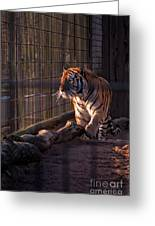 Caged King Of The Jungle Greeting Card