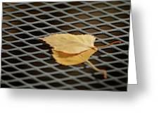 Caged Leaf Greeting Card