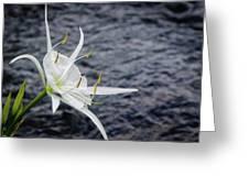 Cahaba Lily #1 Greeting Card
