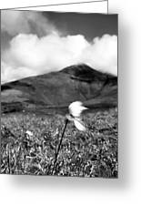 Caherconree Cotton Greeting Card