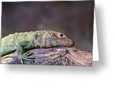 Caiman Lizard Greeting Card