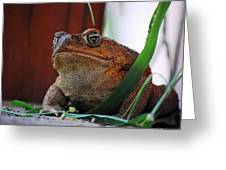 Cain Toad Greeting Card