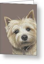 Cairn Terrier - Dave Greeting Card