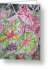Caladiums Tropical Plant Art Greeting Card