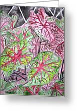 Caladiums Tropical Plant Art Greeting Card