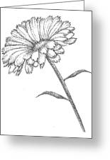 Calendula Greeting Card by Christy Beckwith