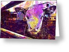 Calf Cow Maverick Farm Animal Farm  Greeting Card