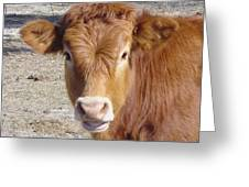 Calf Smiles Greeting Card