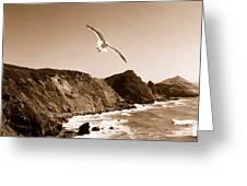 Cali Seagull Greeting Card