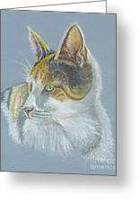 Calico Callie Greeting Card