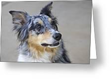 Calico Dog Greeting Card