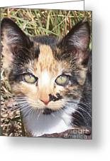 Calico Greeting Card