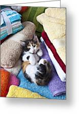 Calico Kitten On Towels Greeting Card by Garry Gay