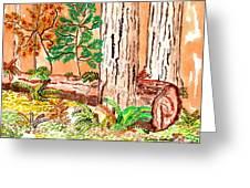 Calif. Redwoods Greeting Card
