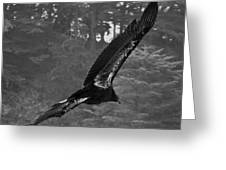 California Condor In Flight II Bw Greeting Card