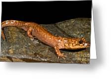 California Giant Salamander Greeting Card