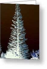 California High Sierra Pine Tree Greeting Card